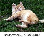 Stock photo playing cat 625584380