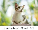 Stock photo cat thai 625604678