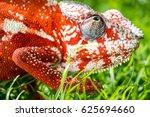 a bright orange chameleon is... | Shutterstock . vector #625694660
