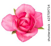 one pink rose flower isolated... | Shutterstock . vector #625709714
