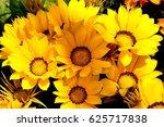 gazania ringens  kiss yellow  ... | Shutterstock . vector #625717838