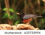 close up with a beautiful bird...   Shutterstock . vector #625733954