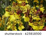 the blossoming orchid | Shutterstock . vector #625818500