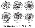 rose  carnation  anemone ... | Shutterstock .eps vector #625836350