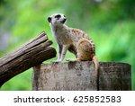 meerkat | Shutterstock . vector #625852583