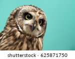 Stock photo owl is a bird with large eyes 625871750