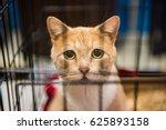 Very Sad Cat Portrait With Big...