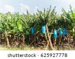 fruit banana trees fruit banana ... | Shutterstock . vector #625927778