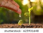 Growing Plants. Plant Seedling...