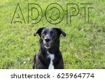Small photo of Black labrador collie mix adopted fur baby. Pretty dog picture with word adopt for rescue or animal shelter graphic.