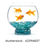 Gold Fish In Aquarium On A...