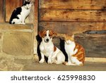 Stock photo dog and cats sitting by the door 625998830
