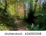 A Beautiful Green Forest With...