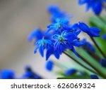 blue flowers  soft focus blur....   Shutterstock . vector #626069324