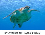 Green Sea Turtle Face To Face....