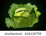 a head of cabbage. vector... | Shutterstock .eps vector #626120750