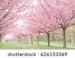 japanese cherry blossoms  | Shutterstock . vector #626153369