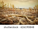 Low Angle Of Dry Grass. Global...