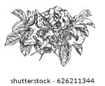 briar flowers  vector...   Shutterstock .eps vector #626211344
