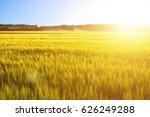 wheat field on beautiful sunset....   Shutterstock . vector #626249288