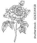 rose flower engraving raster