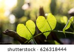 Heart Shape Leafs In The...