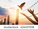 woman's hands free the bird... | Shutterstock . vector #626337038