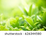 green nature with copy space... | Shutterstock . vector #626344580