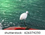 Little Egret Standing On Red...