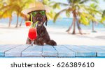 Stock photo black mutt dog posing on the beach with colorful cocktail 626389610