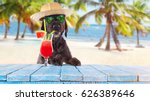Small photo of Black mutt dog posing on the beach with colorful cocktail.