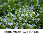 field of blue flowers.blue...   Shutterstock . vector #626414138