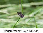 Small photo of geranium argus on grass