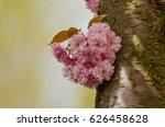 little bouquet of blossoming... | Shutterstock . vector #626458628