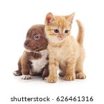 Stock photo kitten and puppy isolated on a white background 626461316