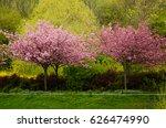 trees of  japanese cherry in... | Shutterstock . vector #626474990
