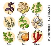 herbs. spices. italian herb... | Shutterstock .eps vector #626482259