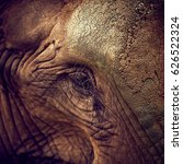 Small photo of Eye of an elephant. African Elephant