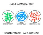 good bacterial flora.... | Shutterstock . vector #626535020