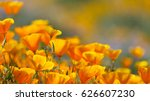 california golden poppy in... | Shutterstock . vector #626607230