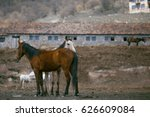 Small photo of A pair of horses showing affection in farm