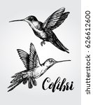 Two Flying Colibri Birds. Hand...