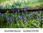 purple flowers near wood fence | Shutterstock . vector #626623550