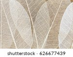 Nature Leaf Texture Abstract