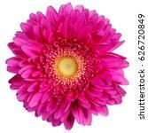 Gerbera Flowers Isolated On...