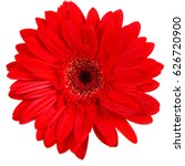 gerbera flowers isolated on white background. yellow gerbera. red gerbera. purple gerbera - stock photo