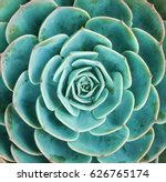 arrangement of the succulents... | Shutterstock . vector #626765174