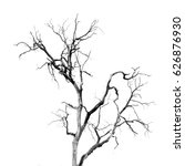 dead tree without leaves   Shutterstock . vector #626876930