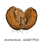 cracked open walnut  a hand... | Shutterstock .eps vector #626877923