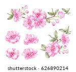 spring collection of sakura bud ... | Shutterstock . vector #626890214